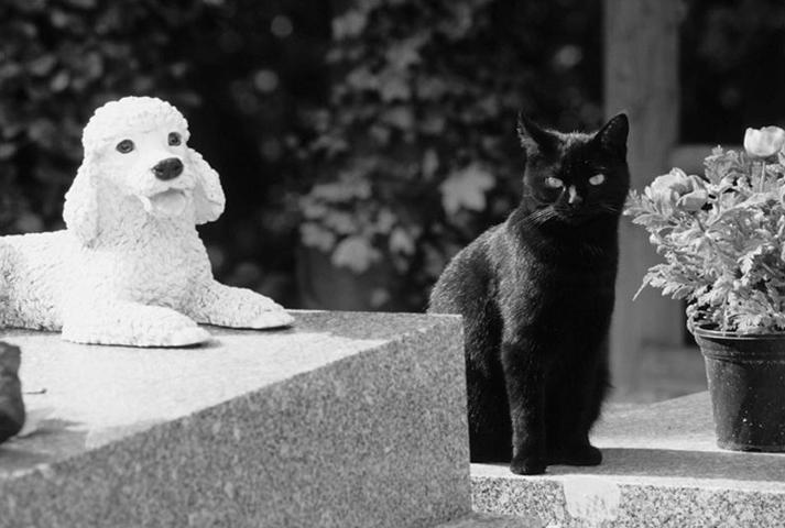 Cimetière des chiens d'Asnières. © Photos Didier Raux