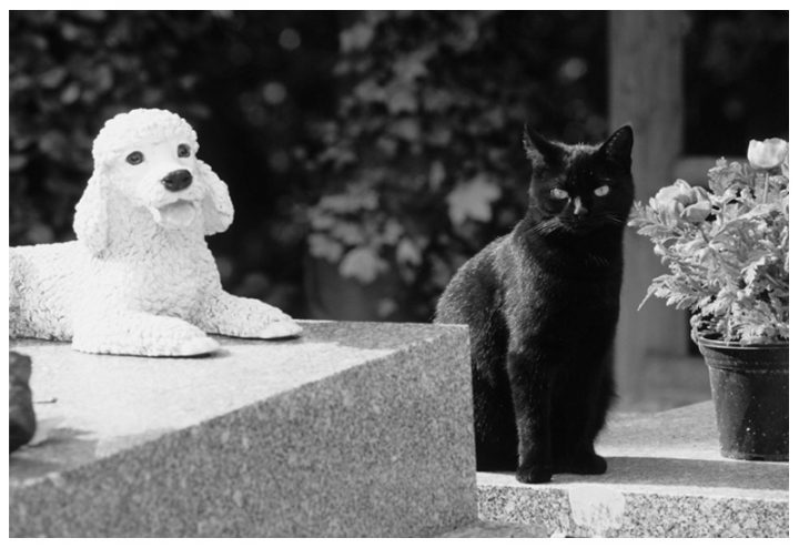 Cimetière des chiens Asnières 14