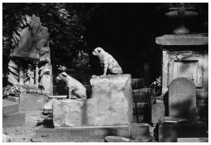 Cimetière des chiens Asnières 22