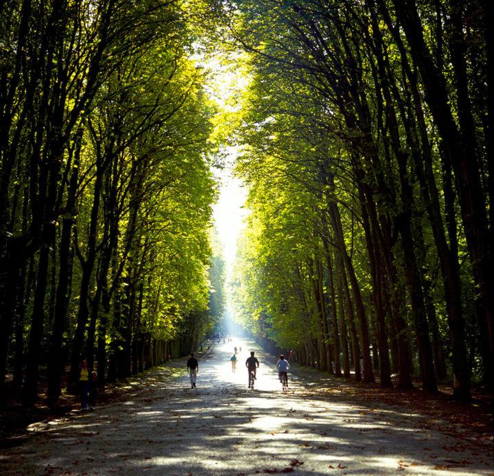 Parc Saint-Cloud © Didier Raux 20