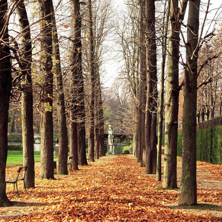 Parc Saint-Cloud © Didier Raux 9