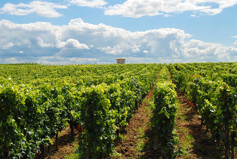 Les vignobles de Saint-Émilion © Didier Raux