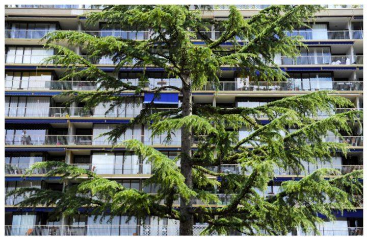 F.Pouillon à Boulogne © Didier Raux 7