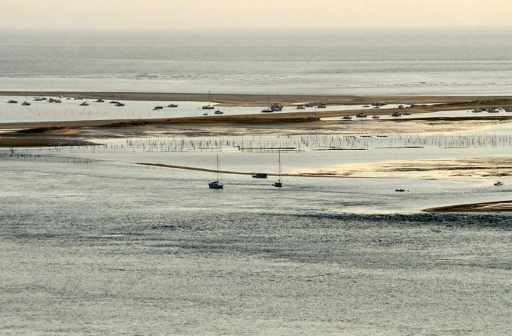 Le banc d'Arguin à marée basse.© Photo Didier Raux