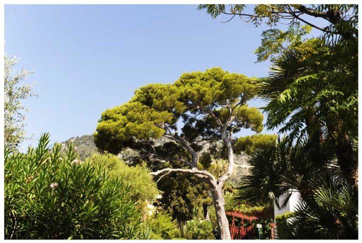 Villa Grecque Kérylos © D Raux 22