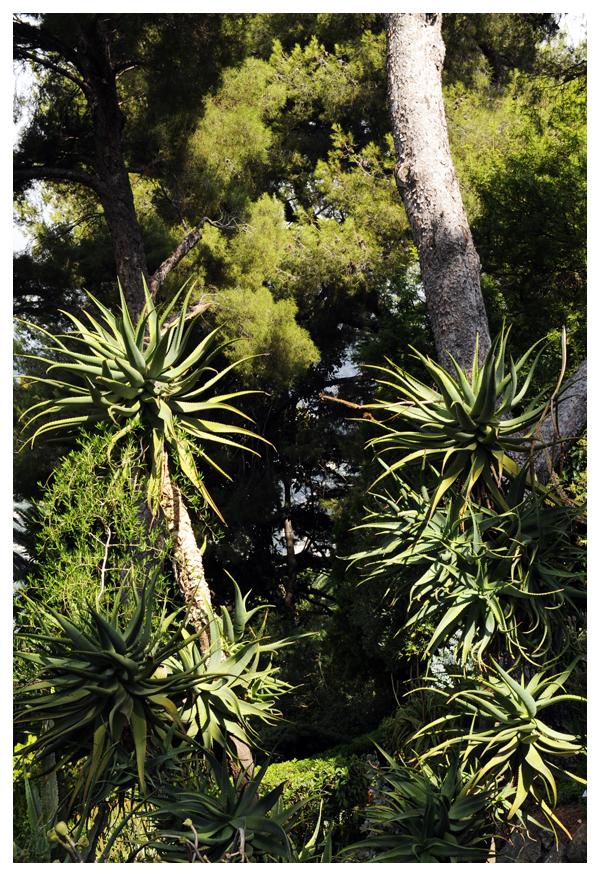 Villa & jardins Ephrussi de Rothschild 8