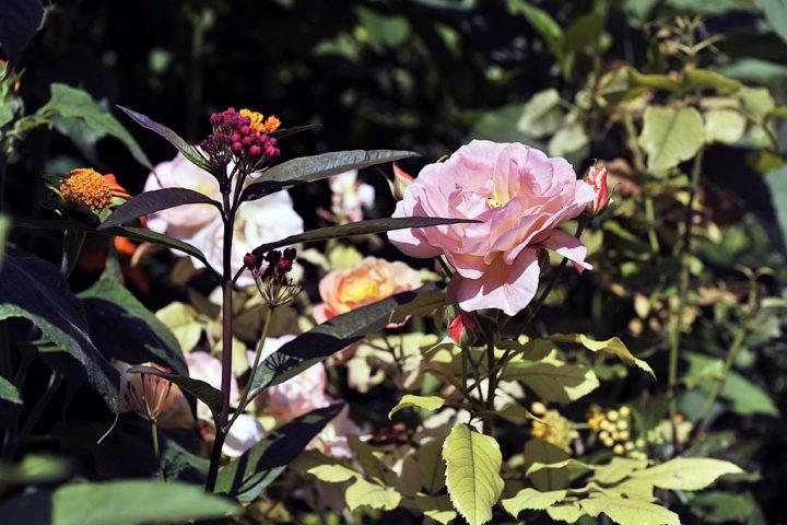 Jardin et Maison Claude Monet à Giverny © Photos Didier Raux