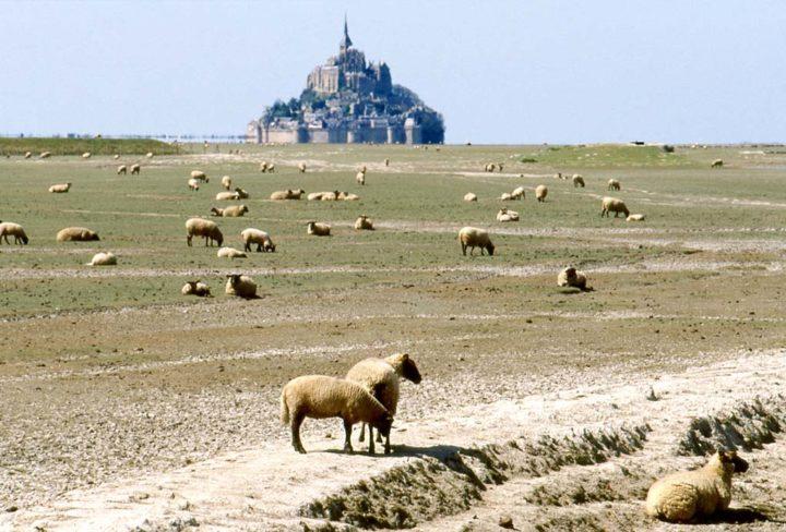 A Pré Salé Baie du Mont Saint-Michel © D Raux 1