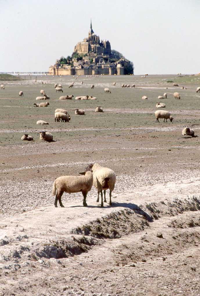 H Pré Salé Baie du Mont Saint-Michel © D Raux 8