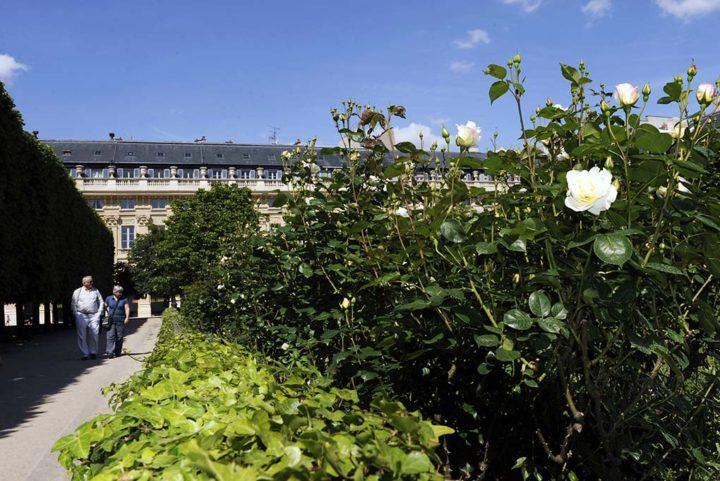 Palais Royal © Didier Raux 14