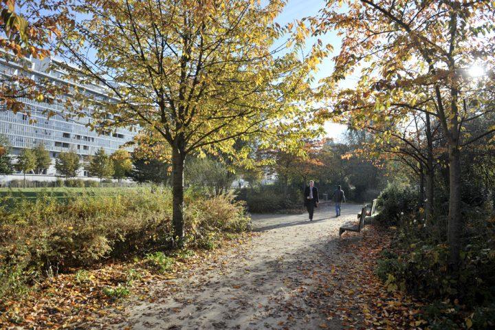 2016 Parc de Billancourt © D Raux 44
