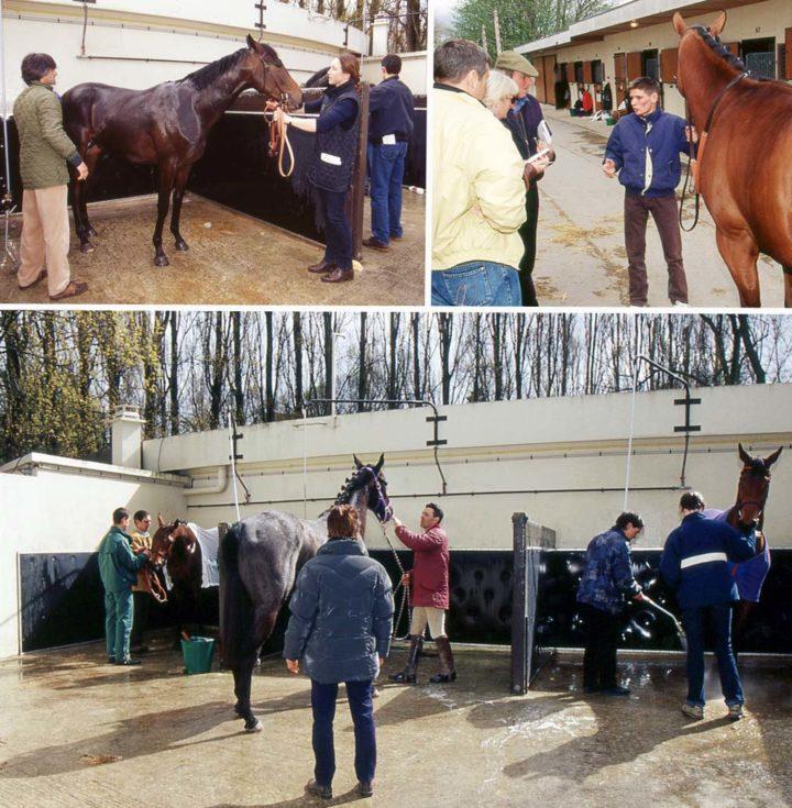 4 Saint Cloud Ventes de chevaux Goffs © D Raux 20