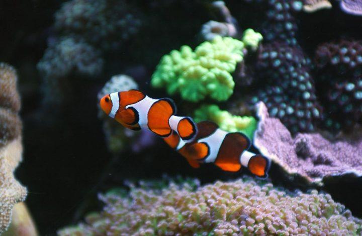 Aquariophile © Didier Raux 2