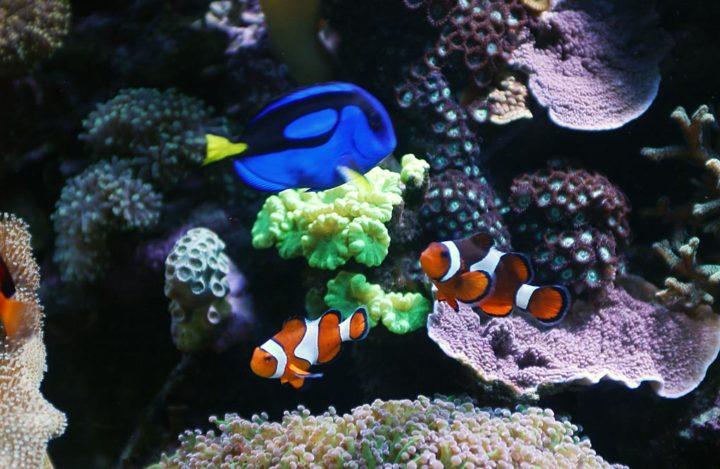 Aquariophile © Didier Raux 3