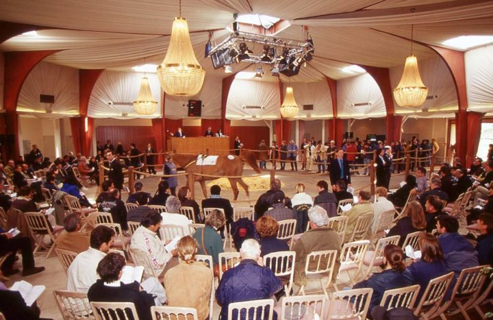 D Saint Cloud Ventes de chevaux Goffs © D Raux 4