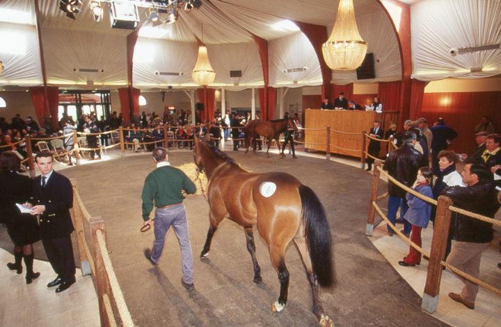E Saint Cloud Ventes de chevaux Goffs © D Raux 5
