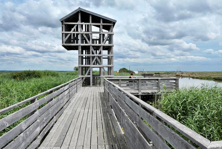 L'observatoire-Estuaire-de-la-Loire-2